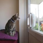 catflap double glazing